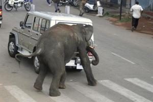 Una manada de elefantes causa el pánico al irrumpir en una ciudad india