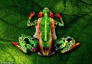 Artista convierte a los humanos en animales, frutas y paisajes (Fotos)