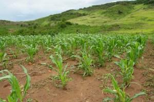 Sociedad Venezolana de Ingenieros Agrónomos y afines: Es indispensable restituir las tierras a los productores