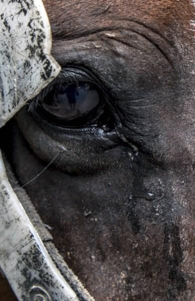 COLOMBIA-CARTAGENA-TOURISM-HORSE