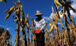 ONU pide ayuda a España ante sequía en Centroamérica