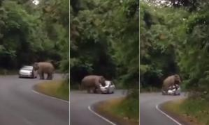 Elefante causa estragos en Tailandia (Video)
