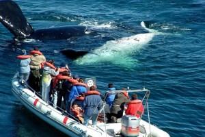 Principales destinos mundiales para avistar ballenas