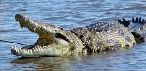 WTF! Confirman que los cocodrilos fueron vegetarianos, pero solo por un tiempo