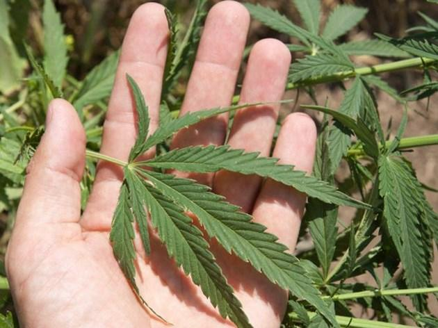 extrato_marihuana