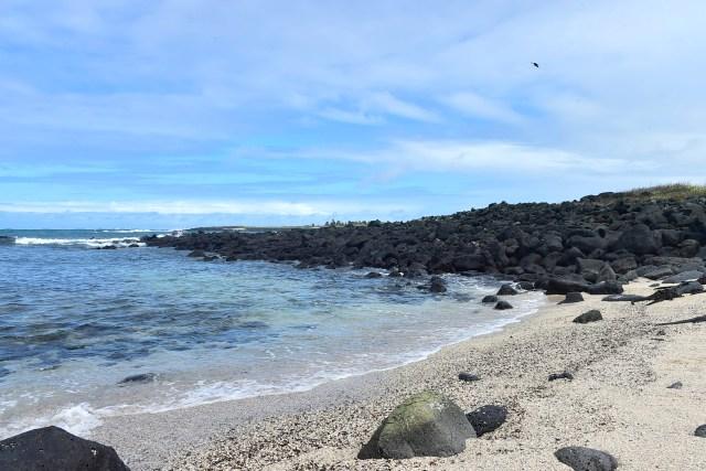 """""""Playa de los Perros"""" (Dogs Beach) in the Santa Cruz island in the Galapagos Archipelago, on July 16, 2015. AFP PHOTO / RODRIGO BUENDIA"""