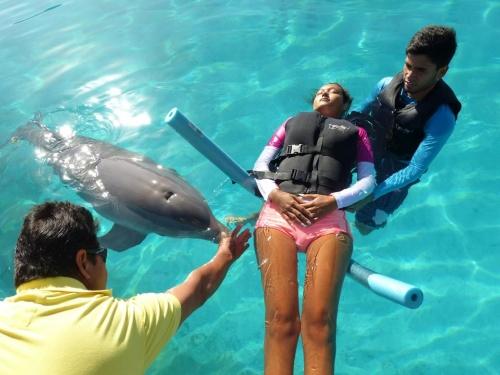 delfines en Venezuela 10