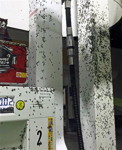 Foto: Insectos infestan una gasolinera en la localidad de Lone Pine, California, en el este de la Sierra Nevada, el 14 de agosto de 2015. Los científicos describen esta invasión de hemípteros de la especie Melacoryphus lateralis como la primera en tiempos recientes en California. (Vía Foto AP/Matthew Hengst)