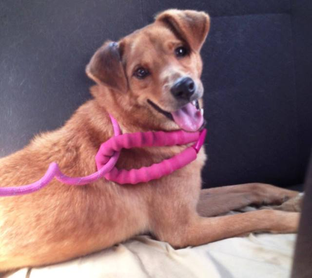 king perrito en adopción jornada de adopción cc galerias el recreo