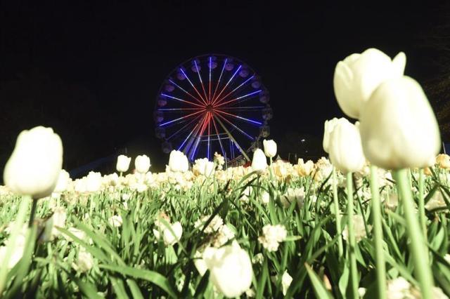 """Una noria es iluminada durante la presentación del NightFest en Canberra (Australia) hoy, 22 de septiembre de 2015. El NighFest es parte del festival anual de flores """"Floriade"""" que se celebra del 23 al 27 de septiembre. EFE/Lukas Coch"""