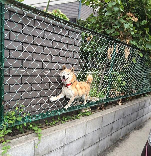 perros-cometiendo-errores-28