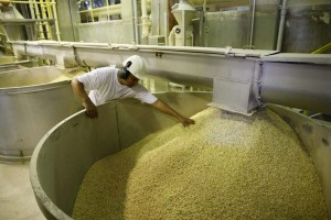 Fedeagro advierte que la producción de maíz alcanza para 60 días