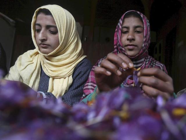 Mujeres separan las hebras del azafrán tras recoger las flores en Pampore (India) a unos 25 km de Srinagar, capital de verano de Cachemira hoy, 3 de noviembre de 2015. EFE/Farooq Khan