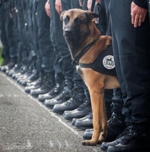 Perra policía
