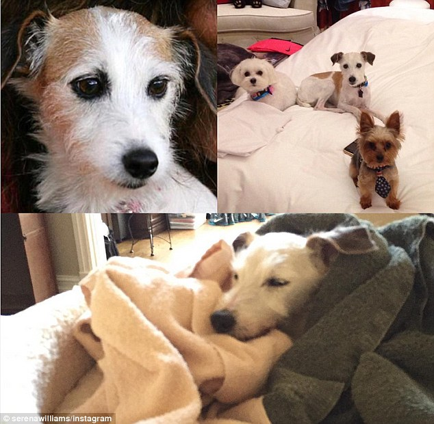 2EC7390400000578-3332269-Sadness_Posting_photos_of_her_other_dogs_Chip_and_Mommy_she_said-m-6_1448393128972