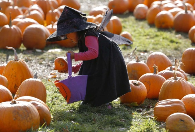 Dressed as a witch, Krizia Magdua plays with pumpkins in the pumpkin patch ahead of Halloween at Crockford Bridge Farm at Addlestone near Woking, Britain October 26, 2015. REUTERS/Luke MacGregor SEARCH - MOST POPULAR INSTAGRAM - FOR ALL 25 IMAGES