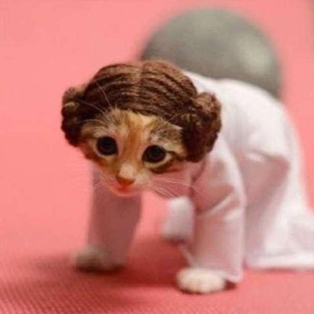 piensopet-blog-animal-disfraz-gato-guerra-galaxias