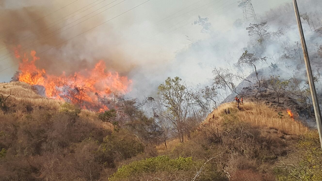 Ballena-Incendio-Avila (6)