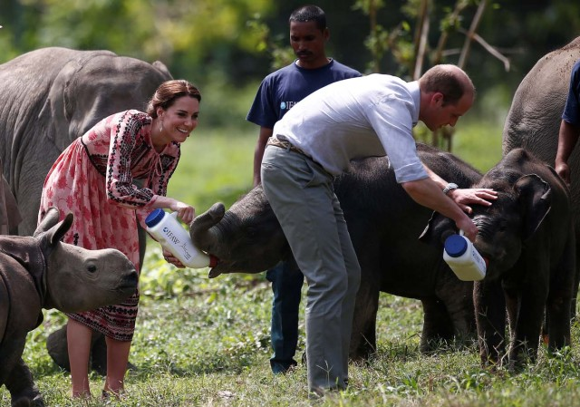 Britain's Prince William and his wife Catherine, the Duchess of Cambridge, feed baby elephants at the Centre for Wildlife Rehabilitation and Conservation (CWRC) at Panbari reserve forest in Kaziranga, in the northeastern state of Assam, India, April 13, 2016. REUTERS/Adnan Abidi
