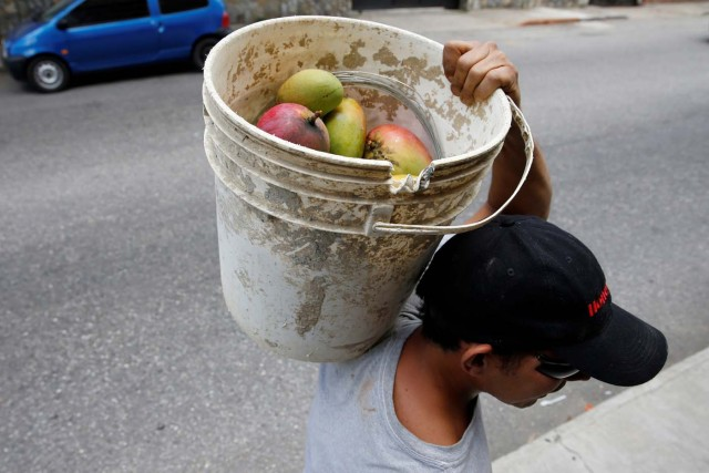 A man carries a bucket full of mangoes after plucking them from a tree in Caracas, Venezuela, June 6, 2016. REUTERS/Carlos Garcia Rawlins