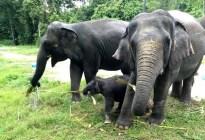 Elefantes aplastaron toda una plantación... menos el refugio de estos indefensos animales (VIDEO)