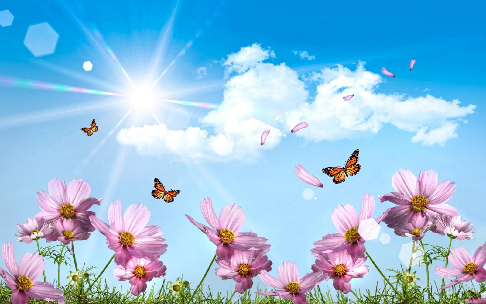 Fotografias De Mariposas Y Flores: Puesta-de-sol-en-el-jardín-de-flores-y-mariposas