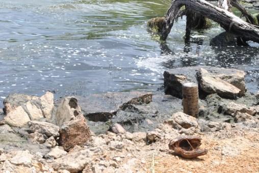 Justo Bermudez- Santa Rita- derrame de petroleo Lago de Maracaibo (7)