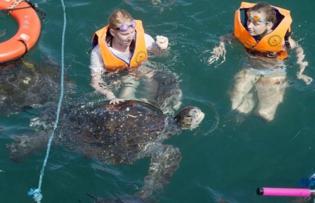 Los turistas nadar con las tortugas en el muelle de Nuro, Piura, en el norte de Perú, el 12 de julio de 2016. La sobrepesca ha puesto en riesgo la subsistencia de los 30.000 pescadores artesanales que pescan en un tramo de 250 km de costa entre Islilla y Punta Sal, en las regiones de Piura y Tumbes. CRIS BOURONCLE / AFP