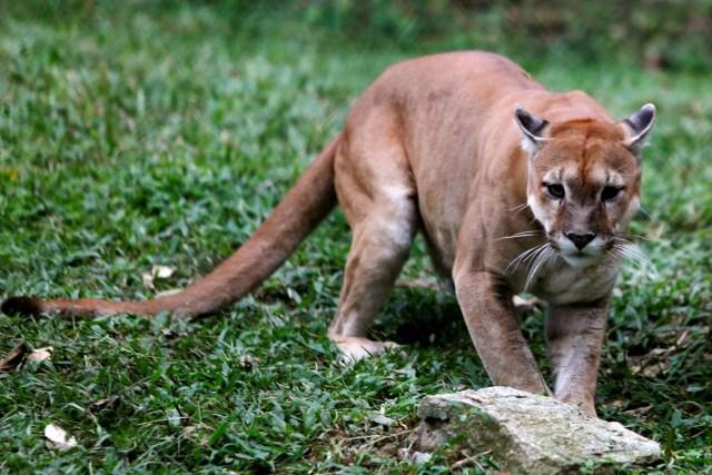 Zoológico de Caricuao