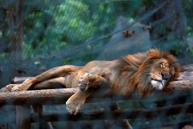 caricuao zoologico