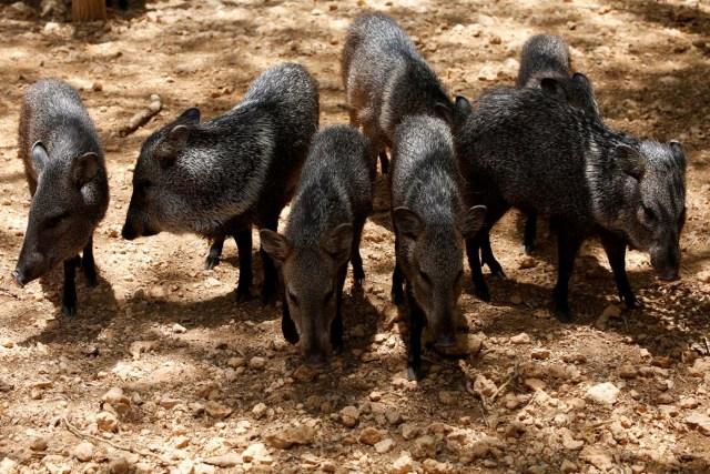 Paraguana zoo in Punto Fijo