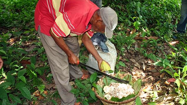 3 agricultor con el fruto del cacao