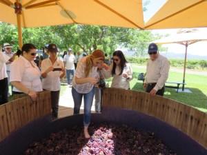 Bodegas Pomar brinda una experiencia inolvidable en su Vendimia 2016