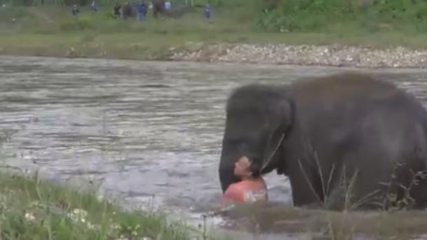 youtube-elefante-tailandia-kX6G--620x349@abc