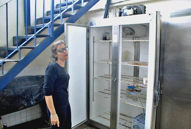 Foto: Asaltan casa de retiro para robarse los alimentos  / Diario Avance