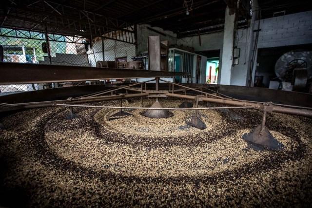 SERIE GRÁFICA 8/12 - CAR08. MÉRIDA (VENEZUELA), 16/11/2016.- Fotografía del 12 de noviembre del 2016, de granos de café en proceso de secado en El Playón, en el municipio Zea, del estado de Mérida (Venezuela). Mérida es uno de los estados con mayor diversidad geográfica que presenta variados paisajes a lo largo y ancho de su territorio, se ubica al occidente del país, es la región más alta de Venezuela y forma parte de la cordillera de los Andes, su punto más elevado es el Pico Bolívar a unos 4.970 m.s.n.m.. EFE/MIGUEL GUTIÉRREZ