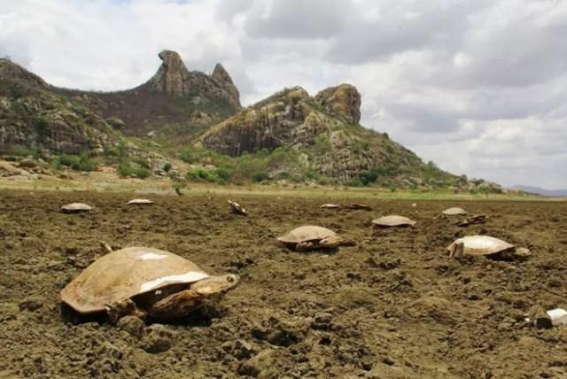 hugo-tortugas-cementerio-brasil-1-min