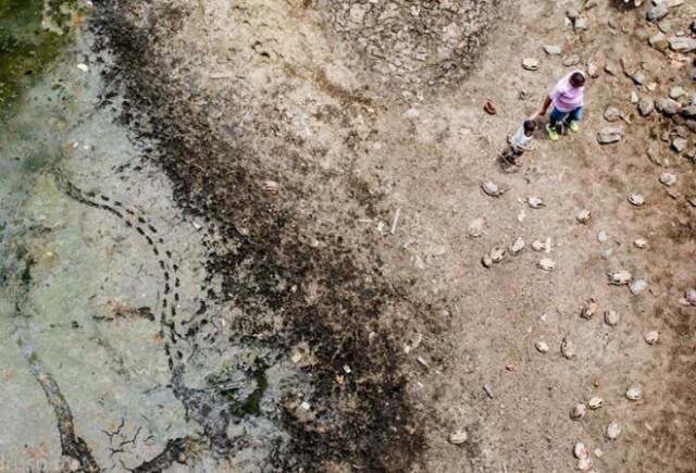 tortugas-cementerio-brasil-2-min