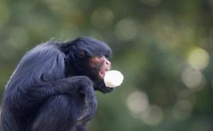 Mono le arrancó dedo a un niño de 19 meses en un zoológico de Portugal