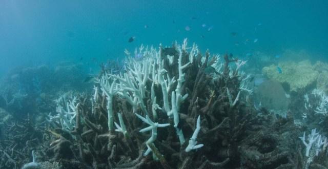 ARR05 VLASSOFF CAY (AUSTRALIA) 06/03/2017.- Detalle del blanqueo masivo que sufre la Gran Barrera de Arrecifes, el mayor sistema coralino del mundo situado en el noreste de Australia, em Vlassof Cay (Australia) el pasado 6 de marzo de 2017. EFE/Wwf/Biopixel Handout SÓLO USO EDITORIAL/PROHIBIDA SU VENTA/PROHIBIDO SU USO EN AUSTRALIA Y NUEVA ZELANDA