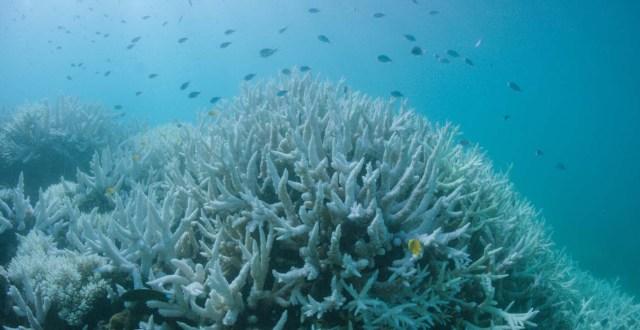 ARR07 VLASSOFF CAY (AUSTRALIA) 06/03/2017.- Detalle del blanqueo masivo que sufre la Gran Barrera de Arrecifes, el mayor sistema coralino del mundo situado en el noreste de Australia, em Vlassof Cay (Australia) el pasado 6 de marzo de 2017. EFE/Wwf/Biopixel Handout SÓLO USO EDITORIAL/PROHIBIDA SU VENTA/PROHIBIDO SU USO EN AUSTRALIA Y NUEVA ZELANDA