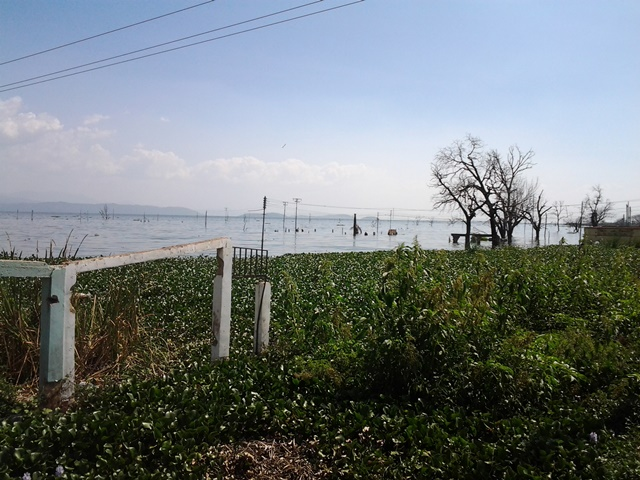 Sector Brisas de Lago en Municipio Girardot del Estado Aragua / Referencial
