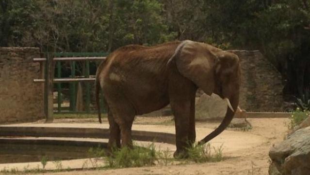 Elefante Ruperta