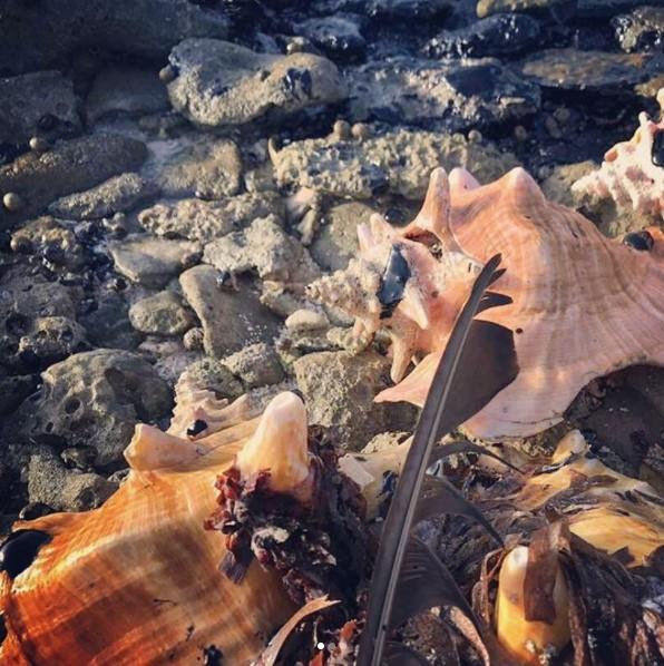 Más evidencia de la contaminación ambienal en Nordisquí. Foto: Instagram/@conbive