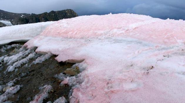 nieve-sangrienta-2