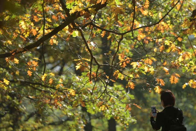 A woman takes a selfie at Tiergarten park on a sunny autumn day in Berlin, Germany October 15, 2017. REUTERS/Stefanie Loos