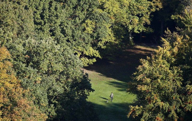 A woman with a dog walks through the Tiergarten park on a sunny autumn morning in Berlin, Germany, October 16, 2017. REUTERS/Fabrizio Bensch