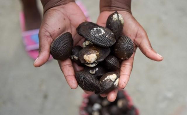Una mujer muestra almejas que cosechó en un manglar cerca de City 2000, una villa de chabolas que alberga a personas desplazadas por guerras territoriales entre bandas criminales en el municipio de Tumaco, departamento de Nariño, Colombia, el 2 de noviembre de 2017. / Raul Arboleda