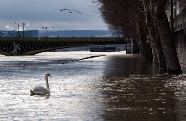 LAN70. PARÍS (FRANCIA), 30/01/2018.- Un cisne navega por una calle inundada a orillas del río Sena en París (Francia) hoy, 30 de enero de 2018. El Sena alcanzó esta madrugada el máximo previsto de este episodio de crecida a su paso por París, 5,84 metros, lejos del pico logrado hace dos años, cuando marcó los 6,10 metros y dos personas murieron en la región parisiense. EFE/ Ian Langsdon