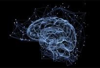 Descubren mecanismos moleculares del cerebro vinculados al autismo y a la esquizofrenia